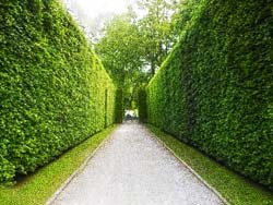 hedges after the completion of markham hedge trimming service