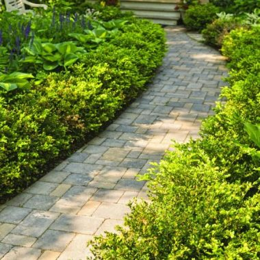 professional landscaped walkway with shrubbery