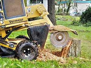 stump removal services in whitby