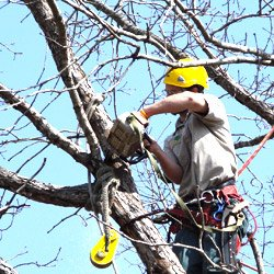 tree services in whitby