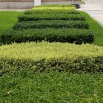 Frequently Asked Hedge & Shrub Trimming Questions