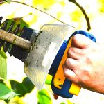 What is The Best Season to Trim Your Hedges?