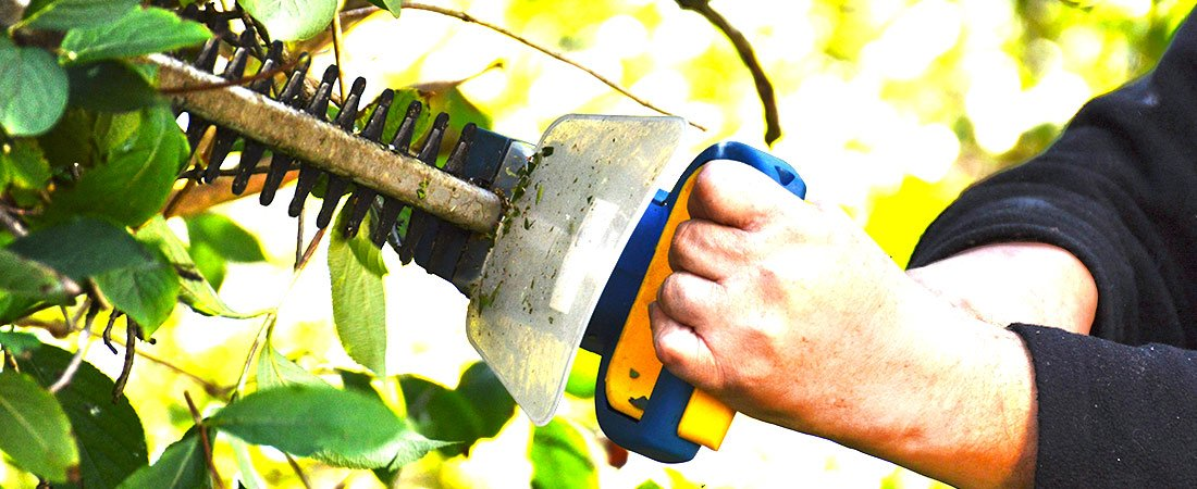 homeowner trimming his hedge at the best time of the year for hedge trimming