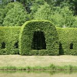 How To Trim Cedar Hedges