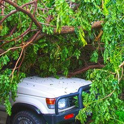 tree that's fallen on car resulting in auto insurance claim related to tree damage