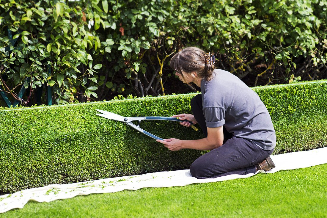woman trimming a hedge using hand trimmers
