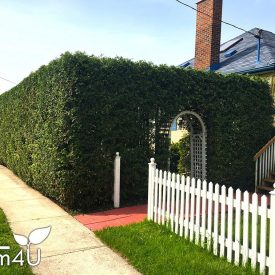 picture of residential hedge trimming service by itrim4u