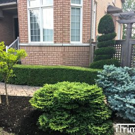 front yard landscaping work by itrim4u