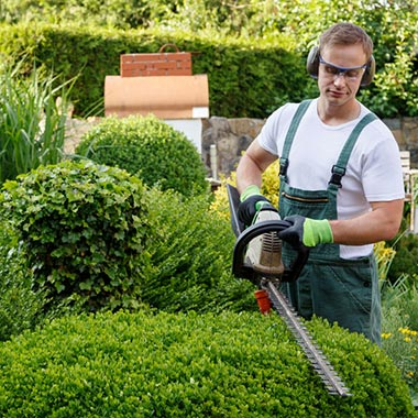 worker trimming the top of a shrub using an electric hedge trimmer