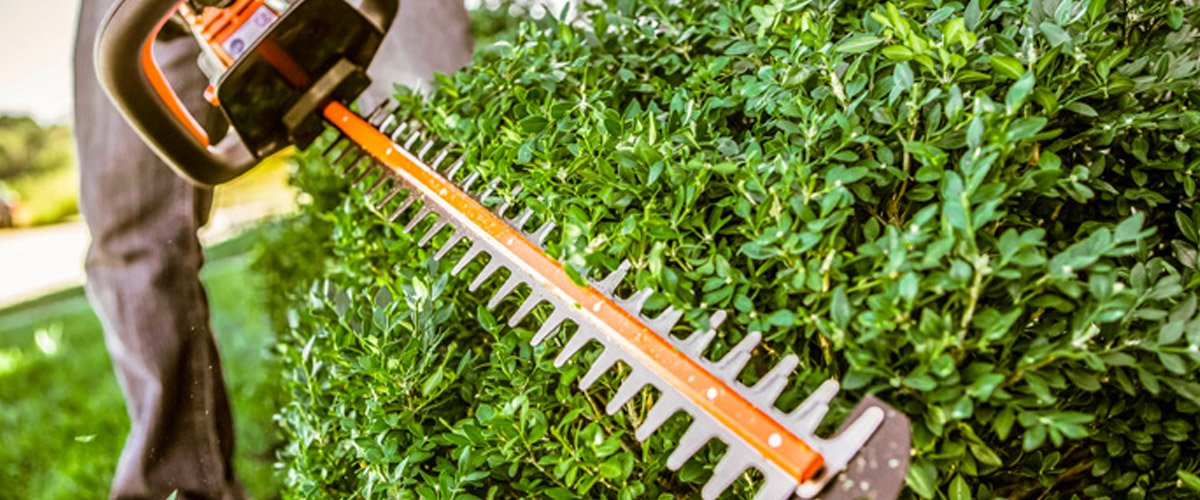 stihl electric clippers getting ready to trim hedge