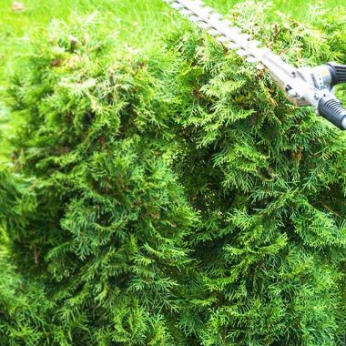 toronto-hedge-trimming-services-title-bg-v2